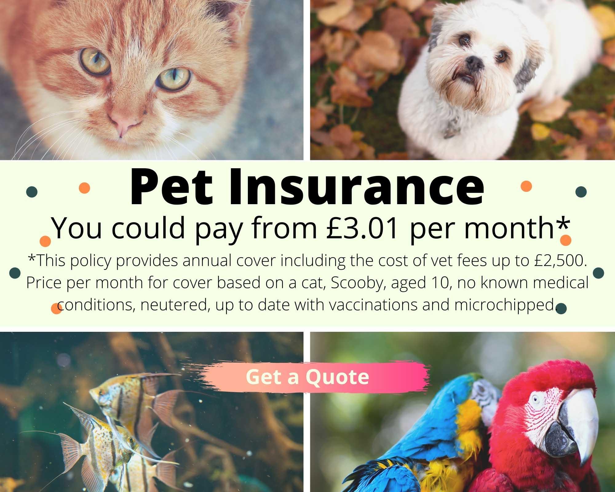 Save on Pet Insurance