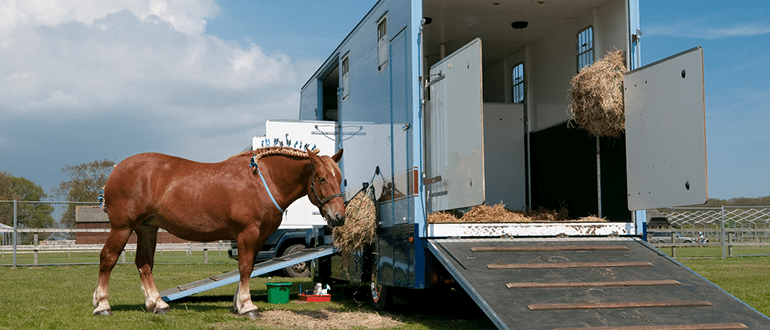 Horsebox & Trailer Insurance