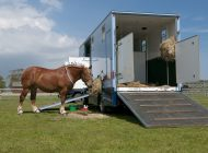 Compare Horsebox Insurance
