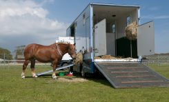 Compare Horsebox Insurance
